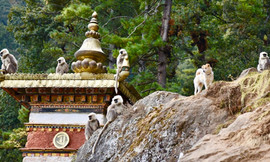 Monkeys at Dodedhra Monastery