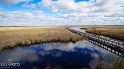 Point Pelee, ON
