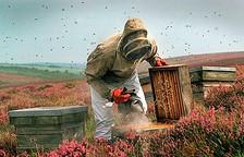 Praca pszczelarza
