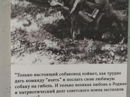 Собаки в обороне Москвы