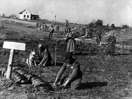 Разминирование пригородов Ленинграда после блокады