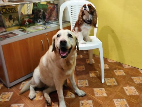 Сюрпризы в Музее Собаки