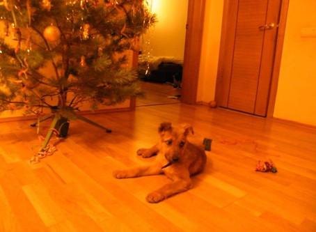 Ожившая картина. История усыновления одной собаки