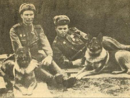 Первые собаки-диверсанты
