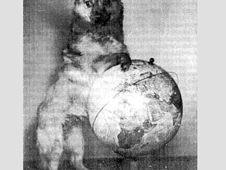 Собаки-космонавты Малышка и Кнопка