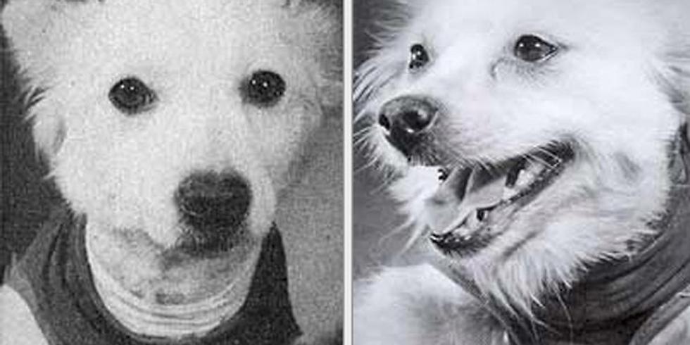 "Онлайн экскурсия ""Собаки в Космосе"""