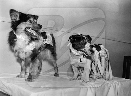 Собаки-космонавты Пальма и Пушок