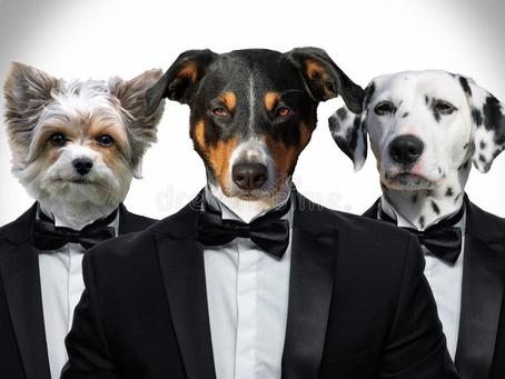 25 ИЮНЯ - Международный день с собаками на работе