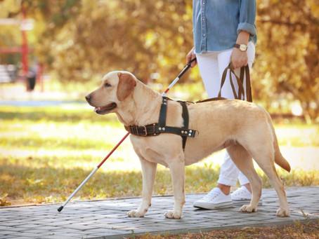 Мастер-класс с собакой-поводырем