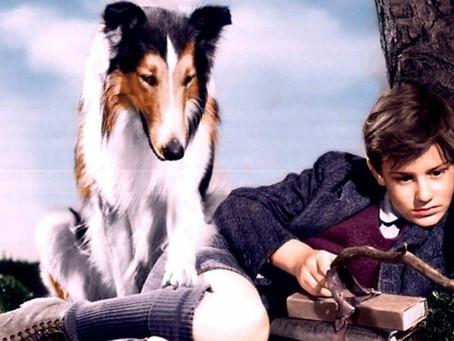 Фильм о собаке Лесси