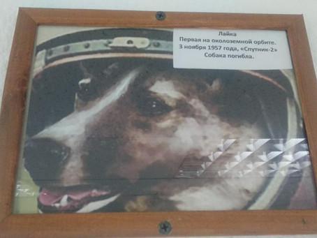 Первая собака на орбите Земли