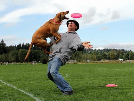 Собака-нарушитель создала новый вид спорта