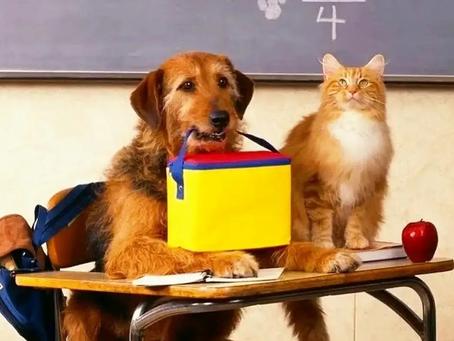За знаниями - в Музей Собаки