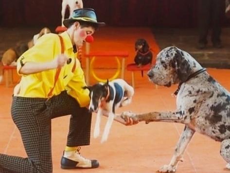 Шоу цирковых собак в Музее Собаки
