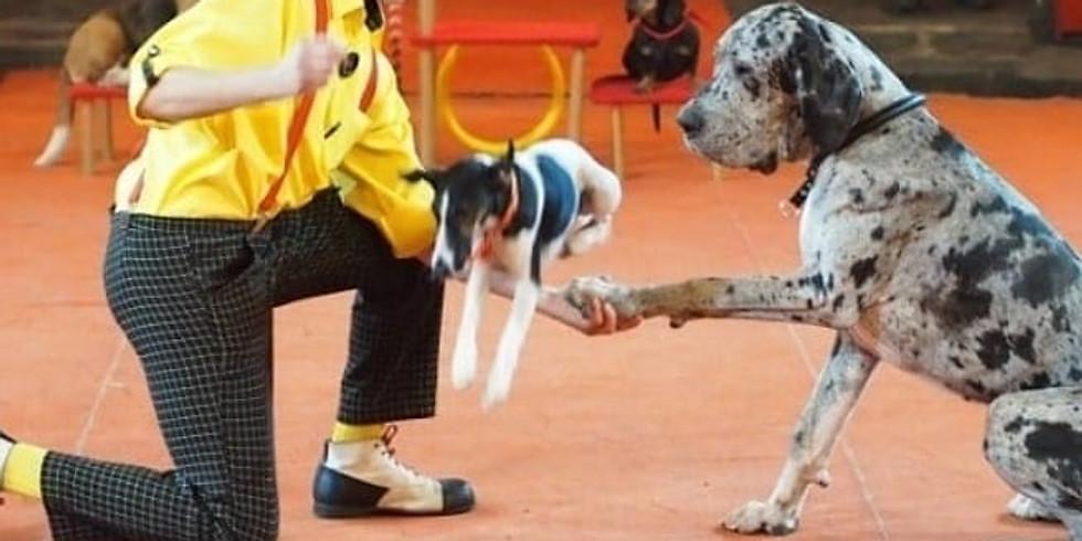Мастер-класс цирковой дрессировки собак