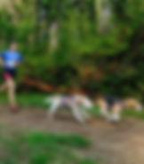 trailrunners CaniCross