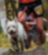canicross trailrunners_edited.jpg