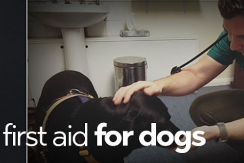 Basic First Aid for Dogs