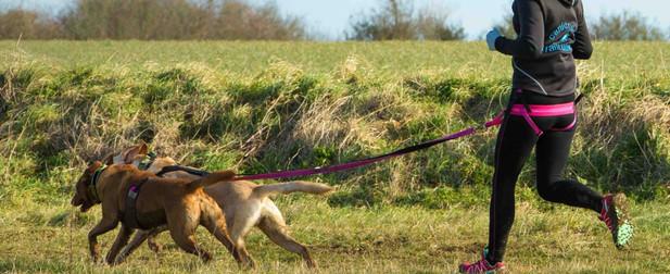trailrunners CaniCross 2 dog