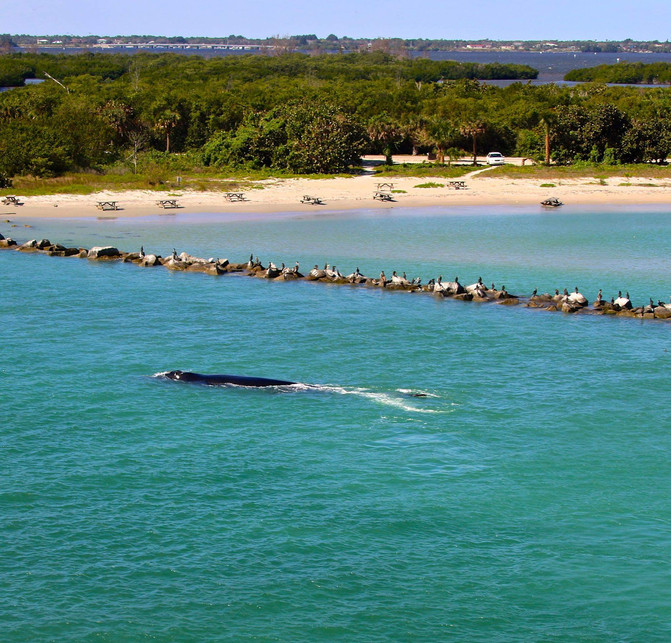 Whale watching in Florida?
