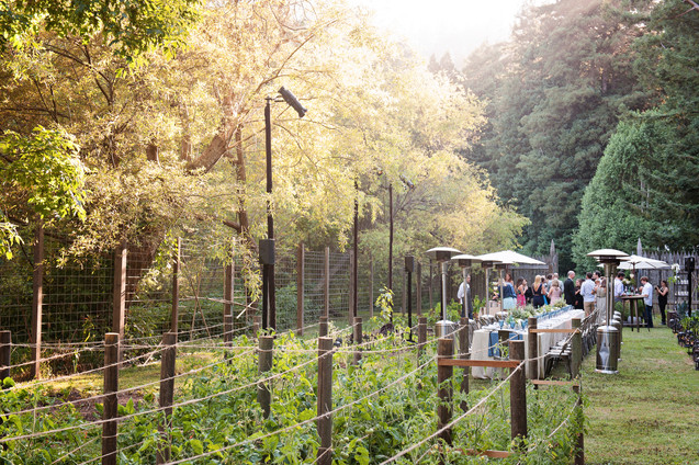 WEDDING AT DAWN RANCH IN THE RUSSIAN RIVER BY CALIFORNIA PHOTOGRAPHER CLAIRE BARRETT 10