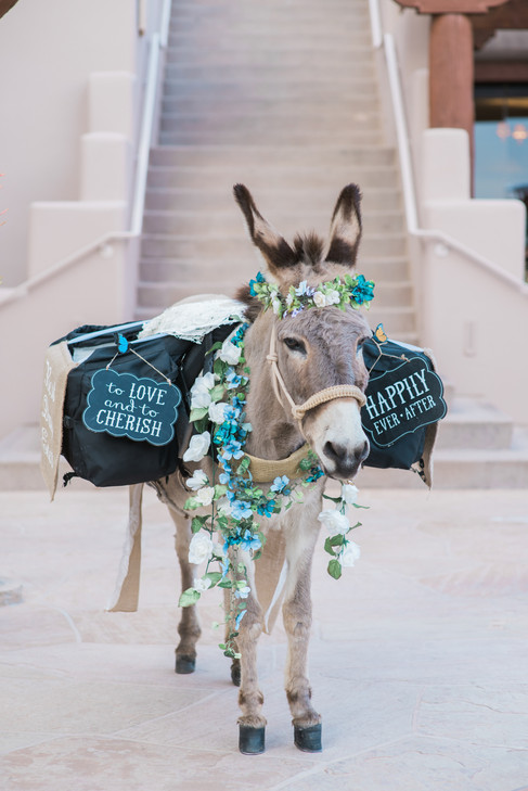 beer burro