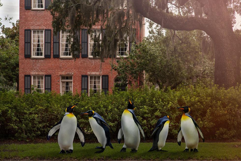 Pinguinus Pecularus