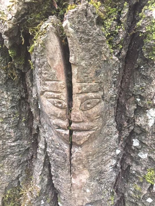 This face reminds me of Mairori carvings! Especially the eyes. Beautiful in that the tree kept growing and thus the face cracked!