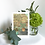 Thumbnail: I'm the 3rd set of Botanical Greeting Cards