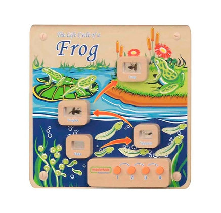 Wall Element - Light-Up Frog Life Cycle Stages Pane (Masterkidz ME13224)