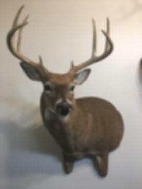 Antlered_Deer Half Body_Wall_IMG_2830.JP