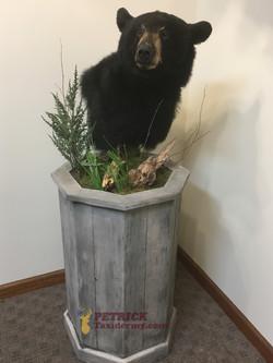 blackbear pedestal wbase