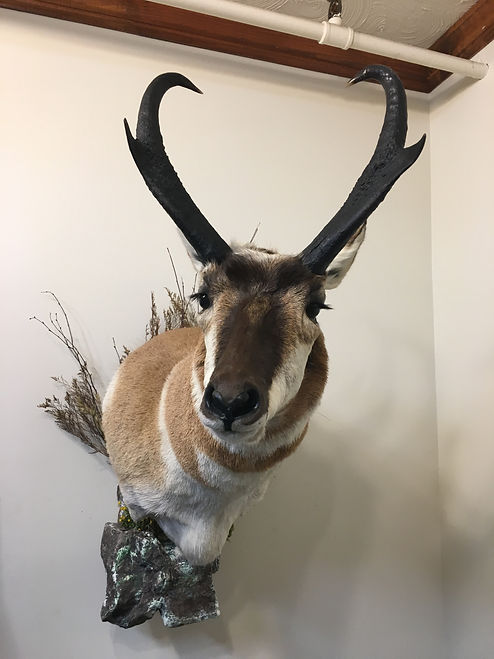 Big Game_Horned_Antelope_IMG_2759.JPG