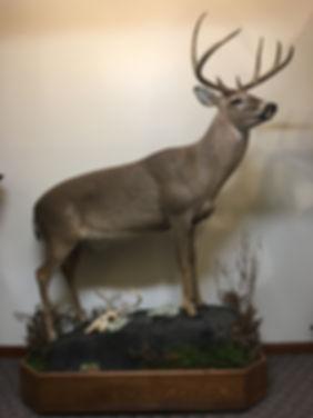 Antlered_Life Size Deer_IMG_2802.JPG