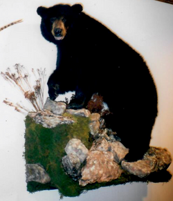black bear LS on wall w rocks_Cropped