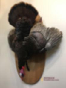 Fran Dead Turkey.JPG