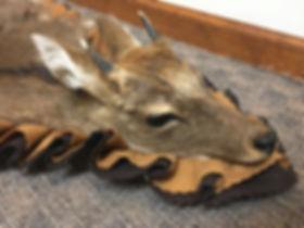 Antlered_Deer Rug_IMG_2810.JPG
