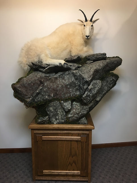 Big Game_Horned_Mountain Goat_IMG_2808.J
