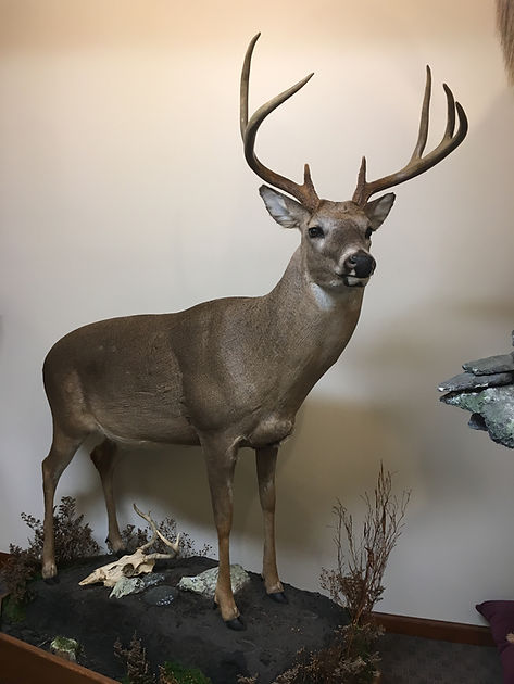 Antlered_Life Size Deer #2_IMG_2803.JPG