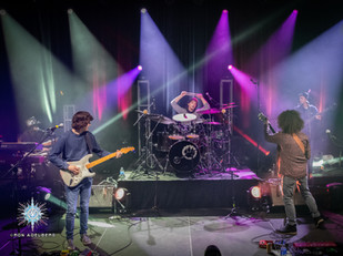 Interview: Brian Murray of Dogs In A Pile - Backstage at The Tree