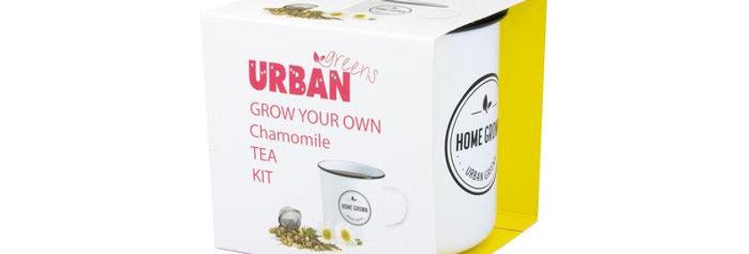 Grow Your Own Tea Kit