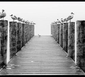 seagull canvas.jpg