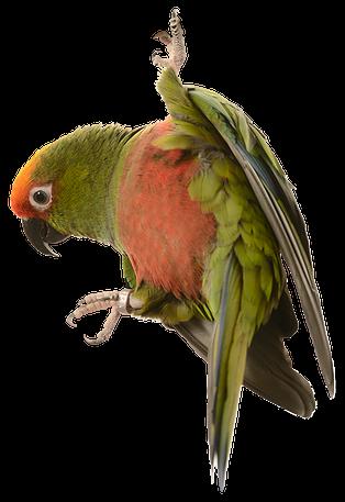 bird_2.webp