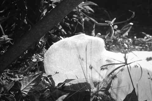 Corpos poéticos - Pesquisa Cicada