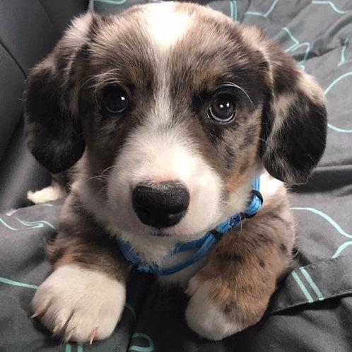 E-book: Van drukke en bijtgrage pup naar meer rust