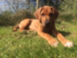 Pup.JPG