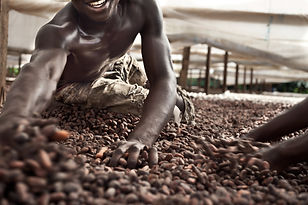 Absolute Options cacao