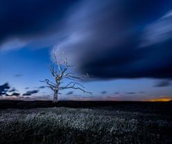 3rd: The Dead Tree - Susan Shreeves
