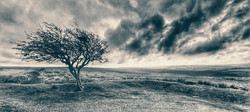 Commended: Tree on the Moor - Martyn Sothcott