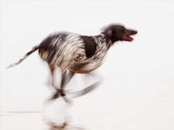 Highly Commended: Blur Hound - George Brown
